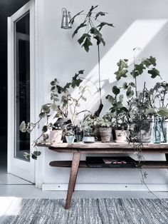 Urban Jungle Bloggers: My Plant Gang by @GittteChrist