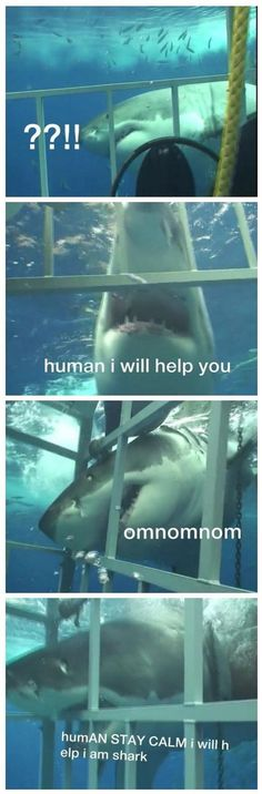 A Helpful Shark  - funny pictures - funny photos - funny images - funny pics - funny quotes - #lol #humor #funny