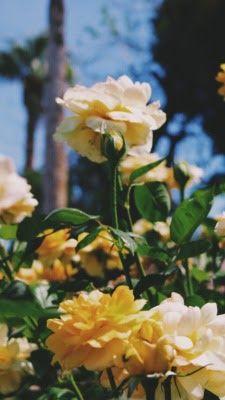Gambar Bunga Dandelion Tumblr In 2020 Flower Wallpaper Nature