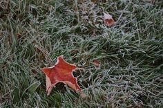 https://flic.kr/p/zonNd9 | frost warning | Goodbye, garden.