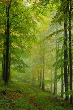 The smell of the forest makes me happy and complete feeling that I'm home. Maybe in a past life I was a forest fairy)) Forest Path, Tree Forest, Forest Trail, Misty Forest, Conifer Forest, Forest Road, Beautiful World, Beautiful Places, Beautiful Forest