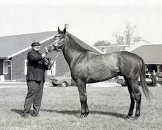 Dancer's Image, DQ'd Kentucky Derby winner 1968, by Tony Leonard. Tony Leonard Collection.