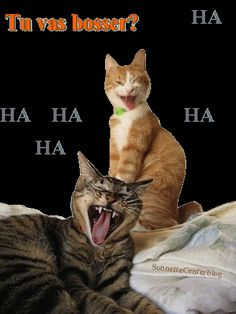 gif mdr - Page 2 Gif Animé, Dog Cat, Cute Animals, Lol, Animation, Cats, Passion, Chistes, Good Night Funny