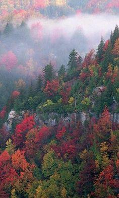 Blackwater canyon, West #Virginia