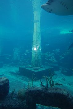 Atlantis The Lost Civilization | new life in the sea: Atlantis: the lost city, or a city lost?