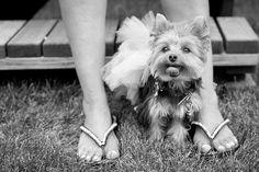 Animal Rescue Flip Flops with VH 1's Chicago Mob Wives Christina Scoleri's doggie Bella