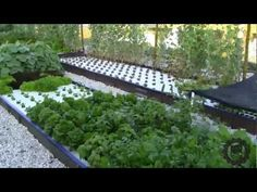 Introduction to the AES Aquaponics System - YouTube