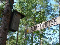 Troll forests. photo: Johanna Rehn