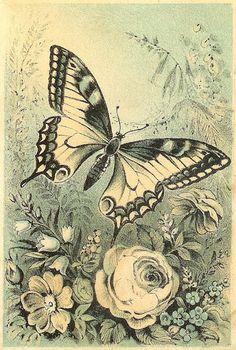 VINTAGE, EL GLAMOUR DE ANTAÑO: Láminas con mariposas 1