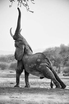 Elephant's can do yoga... so what's my excuse?