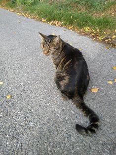 Katze in Wien, in der Herbstsonne Mystery, Cats, Animals, Maine Coon Cats, Kunst, Gatos, Animales, Animaux, Animal