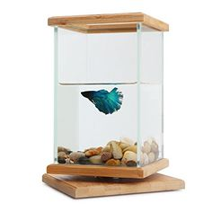 Rotatable Fish Bowls, Segarty Cool Unique Design Small Square Glass Vase Creative Aquarium Kit with Gravel and Shells, Desktop Decorative Fish Tank Could be Betta Fish & Gold Fish Pot Betta Fish Bowl, Glass Fish Bowl, Betta Fish Tank, Mini Aquarium, Aquarium Kit, Aquarium Design, Aquarium Ideas, Small Fish Tanks, Cool Fish Tanks