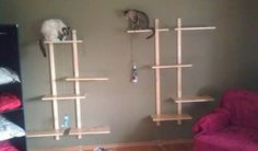Future Houses, Cat Rooms, Houses Ideas, Cat Plays, Cat Houses, Houses Projects, Plays Houses, Boards Ideas, Cat Lady