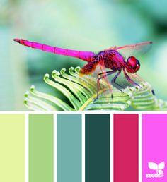 hummingbird colors