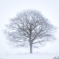 The Winter tree - Hokkaido biei On a hilltop. A murderer's of tree. Everyone is being also judged from a snowstorm.
