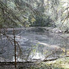Metsälampi Forest lake; polkujuoksu trail running #Akka-Vanu #Kuopio