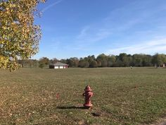 Land ready for your home! Located on Laurie Ave in Mtn. Grove, MO. Large 4 Acre lot with nice view on back of your home. Shop/garage with concrete floor and electricity in place in Mountain Grove MO