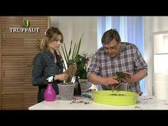 REMPOTAGE ORCHIDEE -Comment rempoter une orchidée ? - Jardinerie Truffaut TV