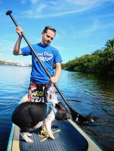 paddle board with mini pig - Google Search