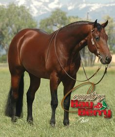 Country Bay Berry 1999 Bay Stallion by Country Dun It out of Great Red Berry. Beautiful Horse Pictures, Most Beautiful Horses, All The Pretty Horses, Animals Beautiful, Quarter Horses, American Quarter Horse, Reining Horses, Bay Horse, Horse Photos