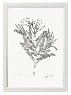Justin Landon Oleander Print(Din A3)