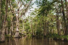 Spanish moss  ___ #landscape #bayou #louisiana  #neben #creatorclass #canon_photos #natgeotravel #travel #travelblog #travelgram #natgeotravel #natgeolandscape #huffpostgram #feedbacknationFFA by ben_legentil