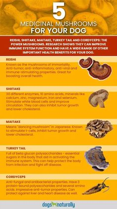 Medicinal Mushrooms For Dogs: Multi-Dimensional Healing. Mushrooms are a great cancer fighter Healing Herbs, Medicinal Plants, Natural Healing, Holistic Healing, Mushroom Tea, Mushroom Kits, Mushroom Benefits, Growing Mushrooms, Mushrooms