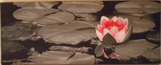 Lotus - Black & Grey Oil on Canvas 20*40 cm