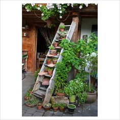 An old wooden ladder as a shelf for plants in clay pots.