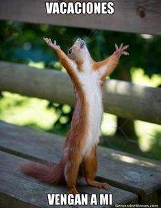 Ever seen squirrels holding a flag, squirrels singing, dancing squirrel, with funny hair? If not lets show you some beautiful squirrel photos to amaze you. Vape Memes, Funny Memes, Comic Foto, Chiropractic Humor, Family Chiropractic, Vape Shop, Sports Humor, Funny Photos, Funny Animals