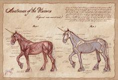 Anatomie de la Licorne-Licorne Poster-Medical par AwkwardAffections