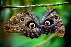 """Résultat de recherche d'images pour """"papillons magnifiques"""""""