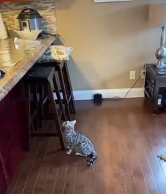 Who's kitty is this! Funny Animal Videos, Cute Funny Animals, Funny Animal Pictures, Funny Animal Memes, Cute Baby Animals, Cat Memes, Funny Cute, Hilarious Memes, Videos Funny