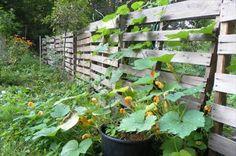 Best Wooden Pallet Fence Ideas