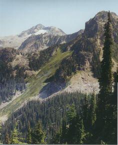 Mt Revelstoke Nat Pk,BC, 8.9.98