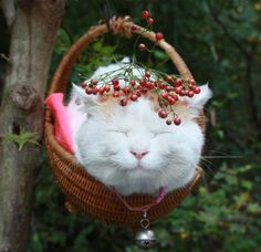 See more 'Shironeko / Basket Cat' images on Know Your Meme!