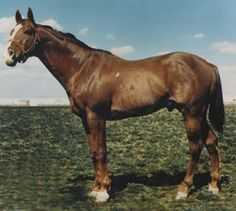 Where would Quarter Horse breeding be without racing world champion Go Man Go? http://americashorsedaily.com/go-man-go/