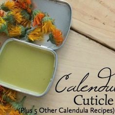 Dry cuticles can crack and become sore, but this simple cuticle cream featuring the soothing herb calendula keeps them soft and in great shape! Links to five other recipes using calendula will make this herb a favorite. Homemade Rose Water, Bath Boms Diy, Dry Cuticles, Homemade Face Moisturizer, Lavender Recipes, Body Polish, Calendula, Facial Masks, Other Recipes