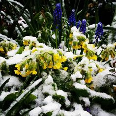 On no... #winter is back... #nature #garden #flowers