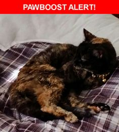 Please spread the word! Kitty was last seen in Sylvania, OH 43560.    Nearest Address: Near Indian Creek Ln & Eagle Trace Dr