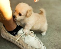 Piccoli, ma davvero piccoli: sono i mini-cuccioli di cane - La Stampa
