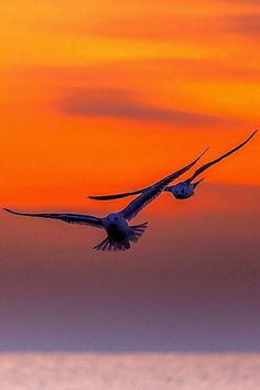 birds and sun Amazing Sunsets, Beautiful Sunset, Beautiful Birds, Animals Beautiful, Eagle Pictures, Cool Pictures, Cool Photos, Birds In Flight, Pet Birds
