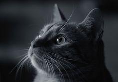 https://flic.kr/p/dcNLvs | The grown up kitten