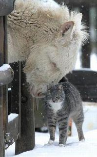 Cat- I love you big furry thing. Horse- I love you too tiny furry thing. Farm Animals, Animals And Pets, Funny Animals, Cute Animals, Wild Animals, Funniest Animals, Colorful Animals, Funny Cats, Beautiful Creatures