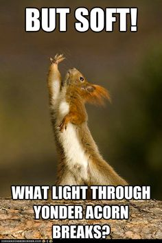 ... about Squirrel! on Pinterest | Funny squirrel, A squirrel and Memes  Animal Shakespeare Memes