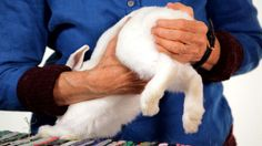 How to Massage Your Rabbit | Pet Rabbits Too much...yet still willing to try it