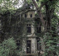Aesthetic Photo, Aesthetic Pictures, Forest Fairy, Abandoned Places, Faeries, Grunge, Scenery, Aesthetics, Twilight