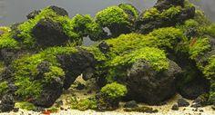 10-Kg-Black-Lava-Rock-Natural-Aquarium-Decorationtropical-_57.jpg (1024×554)