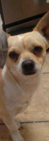 LOST DOG: 09/17/2017 - Tucson, Arizona, AZ, United States. Ref#: L37312 - #CritterAlert #LostPet #LostDog #MissingDog