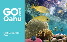 Go Oahu Card attractions pass